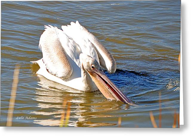 Greeting Card featuring the photograph Pelican Fishing by Lula Adams