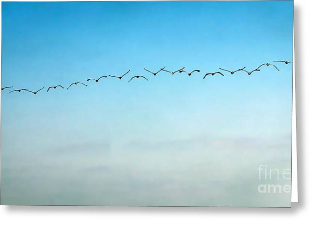 Pelican Flight Line Greeting Card by Peggy Hughes