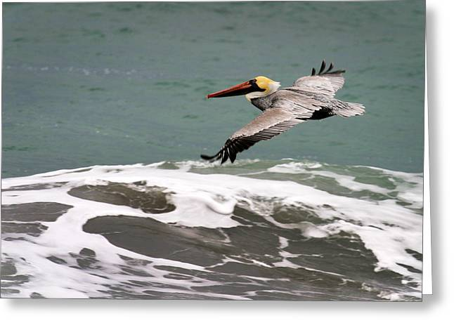 Pelican Flying Greeting Card