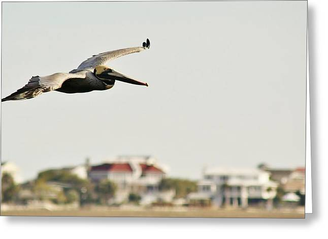 Pelican Flying Over Murrells Inlet Greeting Card by Paulette Thomas