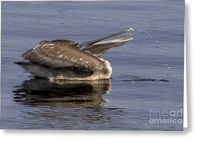 Pelican Fountain  Greeting Card by Meg Rousher