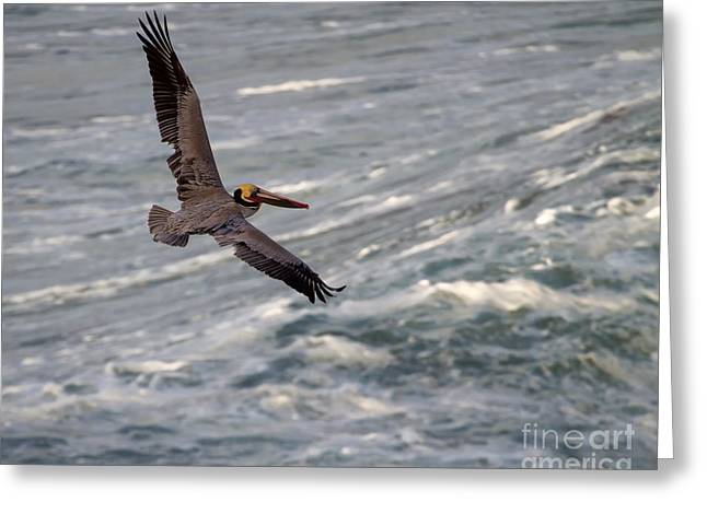 Greeting Card featuring the photograph Pelican Glide by Dale Nelson