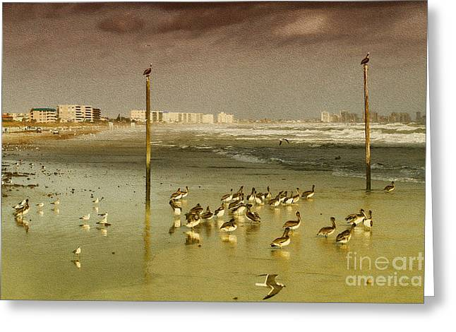 Pelican Haven Greeting Card by Deborah Benoit