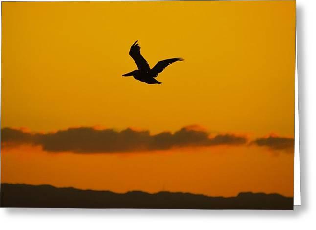 Pelican In Flight Greeting Card