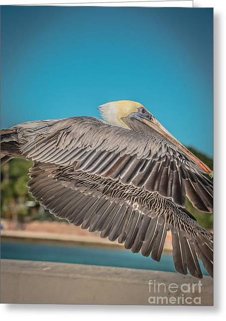 Pelican In Flight White Street Pier Key West - Hdr Style Greeting Card