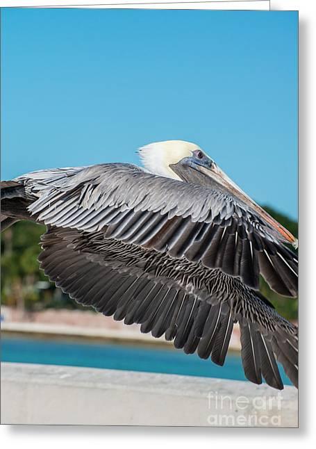 Pelican In Flight White Street Pier Key West  Greeting Card
