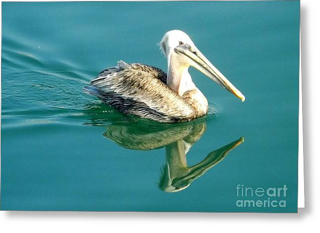 Pelican In San Francisco Bay Greeting Card by Clare Bevan