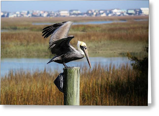 Pelican In The Marsh Greeting Card by Paulette Thomas