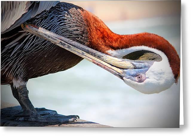 Pelican Itch Greeting Card by Cynthia Guinn