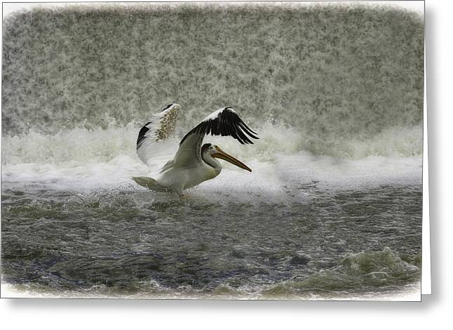 Pelican Landing In Color Greeting Card