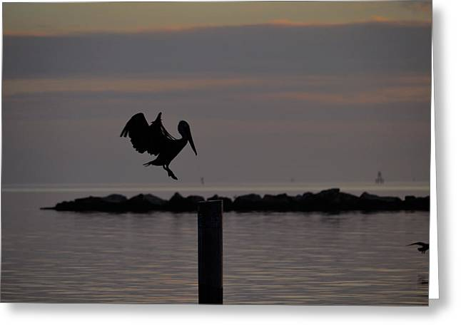 Pelican Landing Greeting Card by Leticia Latocki
