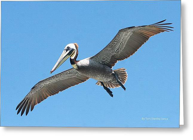 Greeting Card featuring the photograph Pelican Landing On  Pier by Tom Janca
