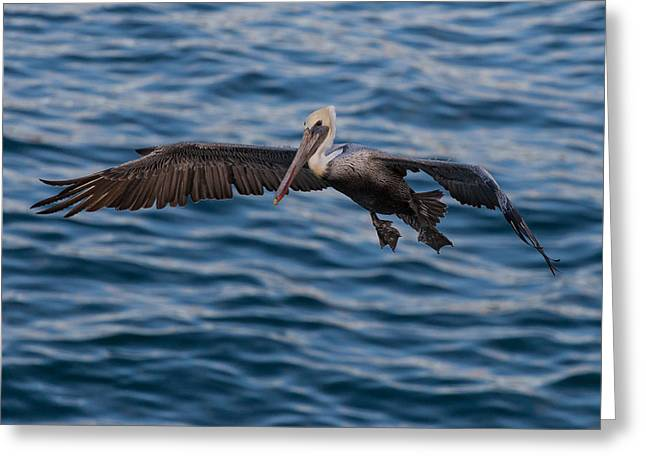 Pelican Landing Greeting Card by Sonny Marcyan