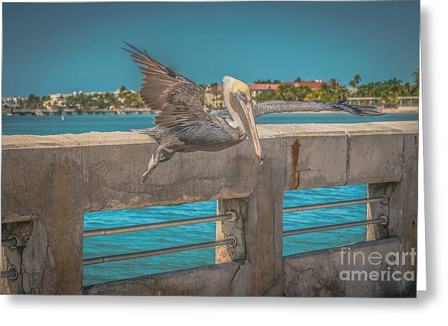 Pelican Landing White Street Pier Key West - Hdr Style Greeting Card