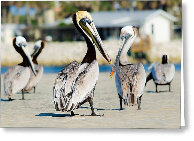 Pelican Looking At You Greeting Card