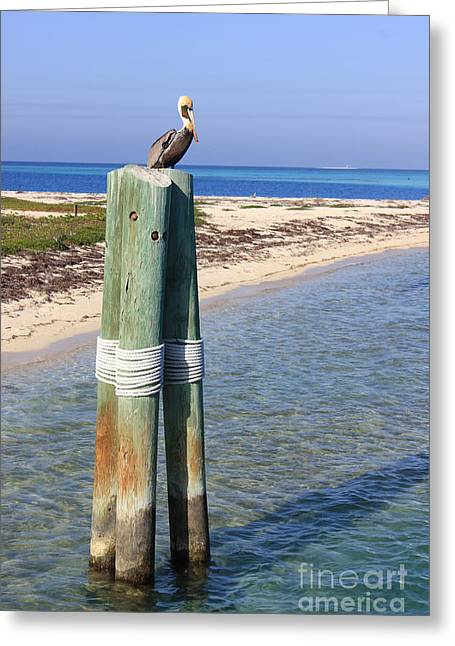 Pelican Lookout Greeting Card by Alison Tomich