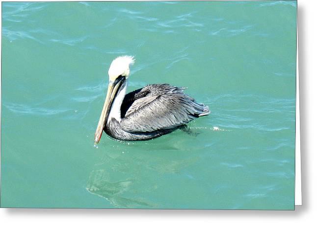 Greeting Card featuring the photograph Pelican by Oksana Semenchenko