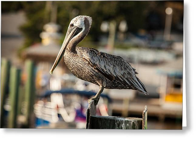 Pelican On A Pole Greeting Card by Paul Bartoszek