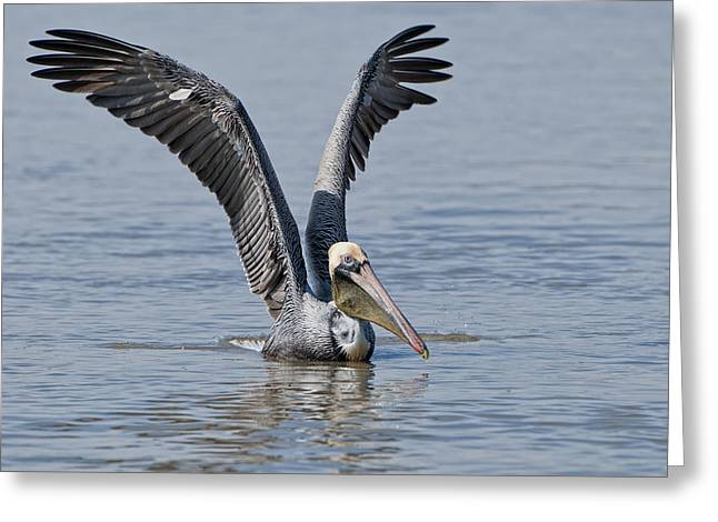 Pelican On Bayou Du Large Greeting Card