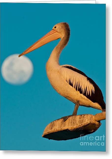 Pelican On Streetlights/ Full Moon Greeting Card by Michael  Nau