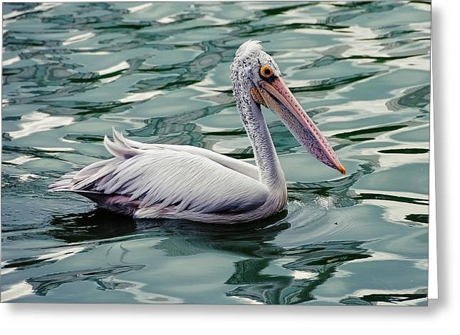 Pelican On The Green Water Greeting Card by Jenny Rainbow