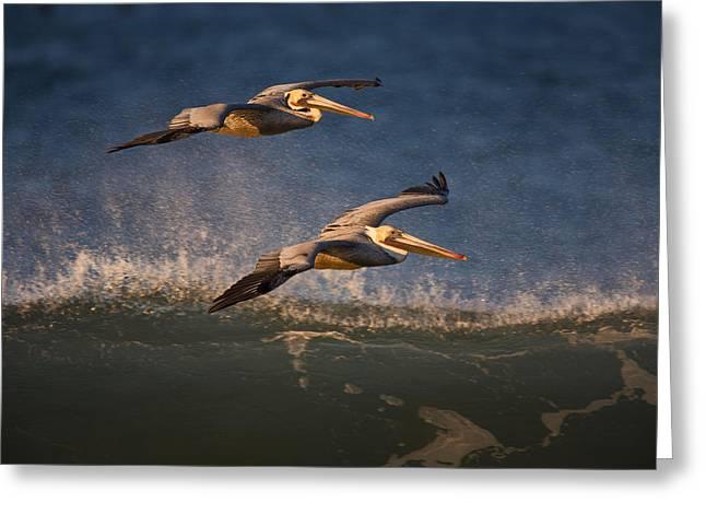 Pelican Pair  73a2315 Greeting Card