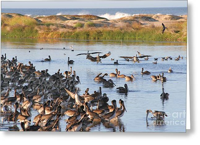 Greeting Card featuring the photograph Pelican Party by Bob and Jan Shriner