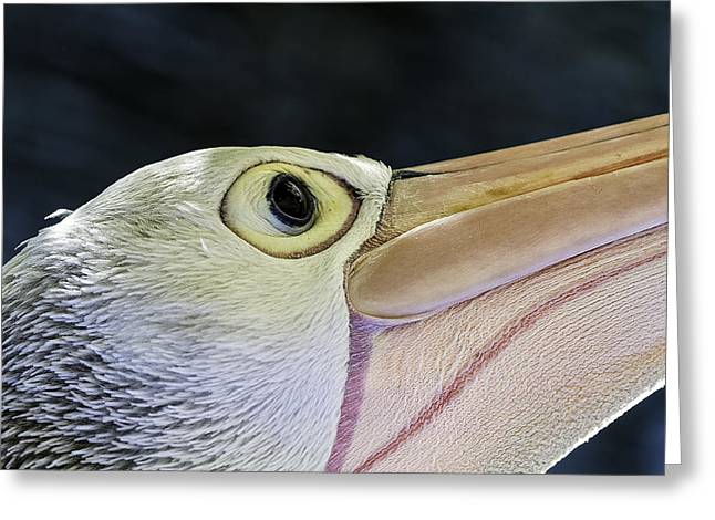 Pelican Portrait 2 Greeting Card