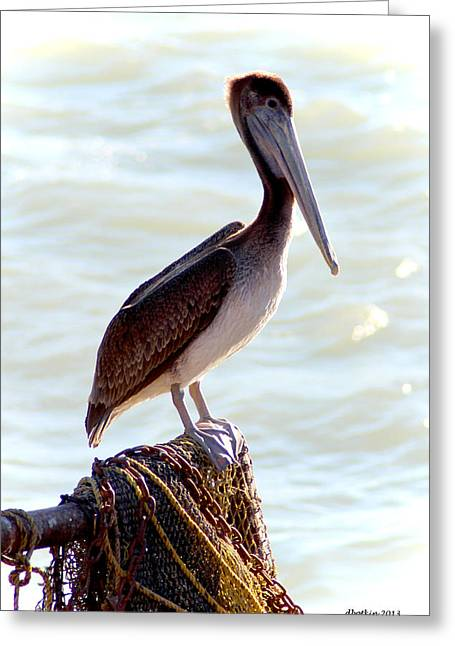Pelican Portrait Greeting Card by Dick Botkin