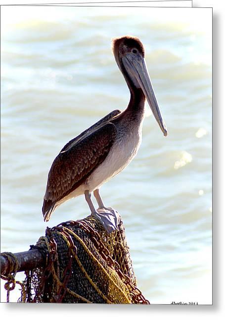 Pelican Portrait Greeting Card