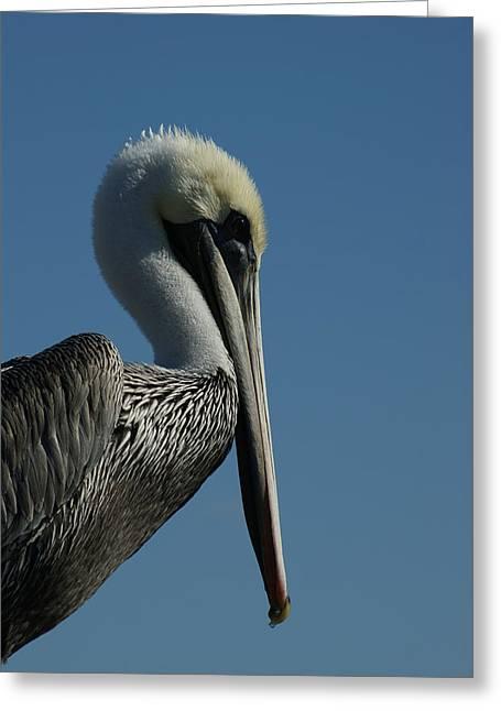 Pelican Profile 2 Greeting Card by Ernie Echols