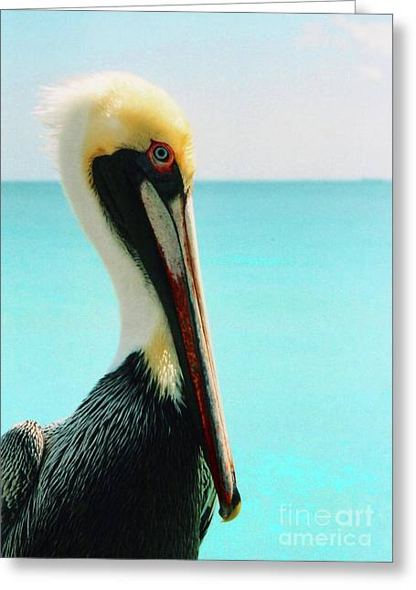 Pelican Profile And Water Greeting Card