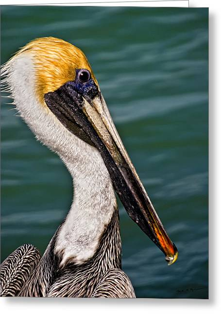 Pelican Profile No.40 Greeting Card