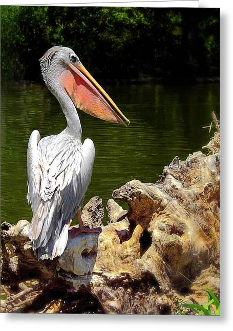 Pelican Proud #2 Greeting Card by Wayne Wood