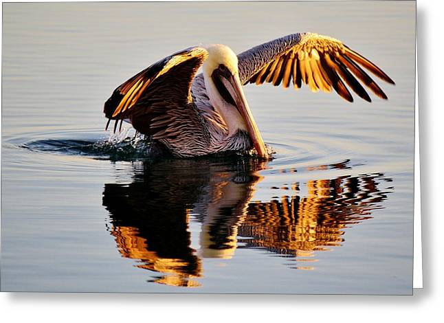 Pelican Reflection Greeting Card by Paulette Thomas