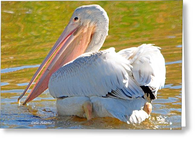 Greeting Card featuring the photograph Pelican Sees Me by Lula Adams