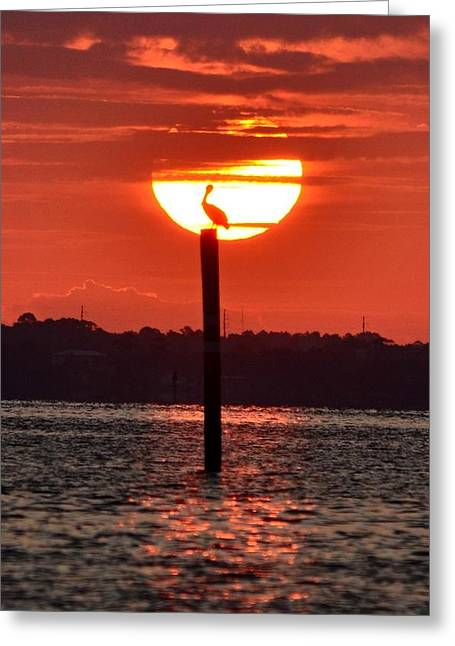 Pelican Silhouette Sunrise On Sound Greeting Card by Jeff at JSJ Photography