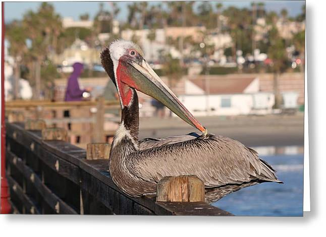 Pelican Sitting On Pier  Greeting Card