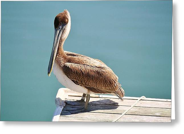 Pelican - Sitting On The Dock Of The Bay Greeting Card by Paulette Thomas