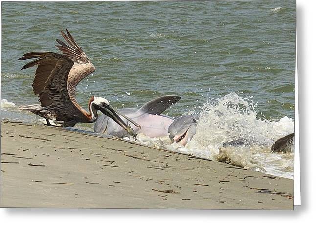 Pelican Steals The Fish Greeting Card by Patricia Schaefer