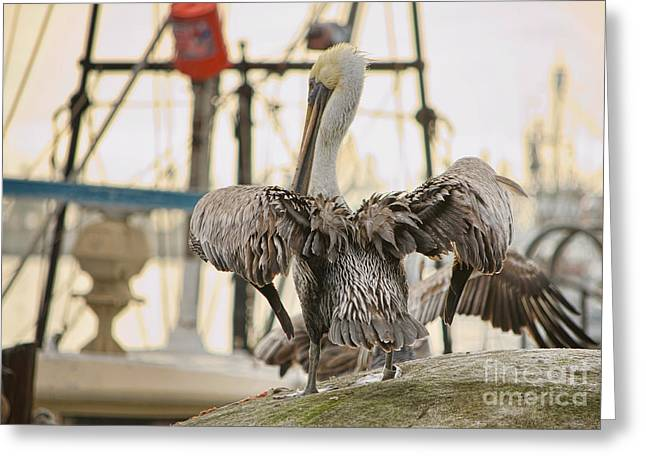 Pelican Strut Greeting Card by Donna Greene