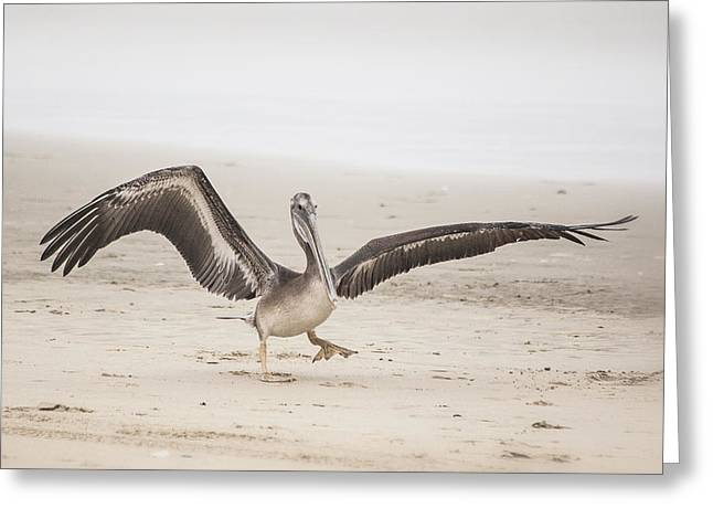Pelican Strut Greeting Card