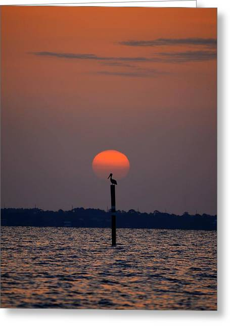 Pelican Sunrise Silhouette On Sound Greeting Card by Jeff at JSJ Photography