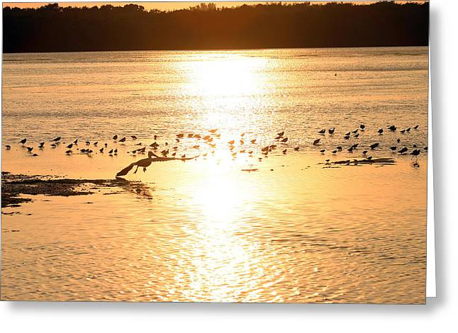 Pelican Sunset Greeting Card by Mark Russell