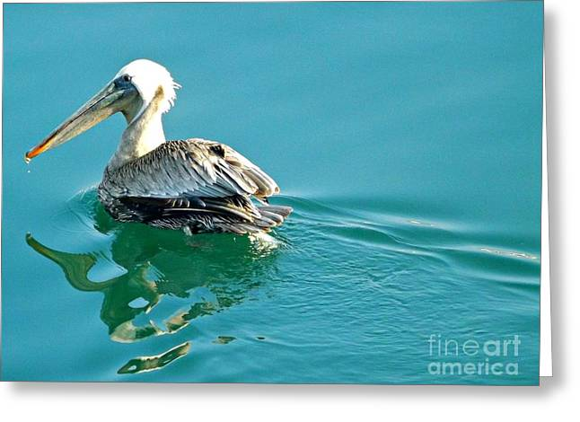 Pelican Swimming Greeting Card by Clare Bevan