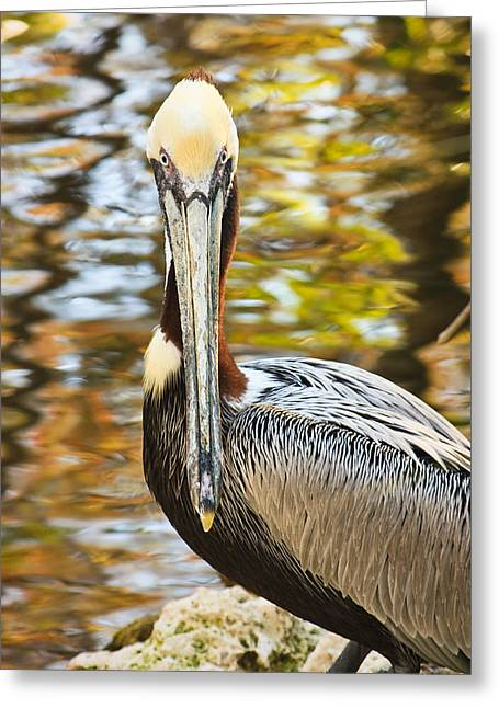 Pelican Greeting Card by Tammy Schneider