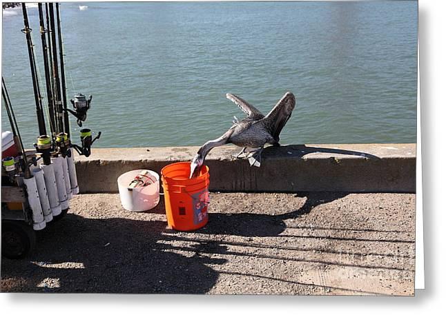 Pelican Thief At San Francisco Torpedo Wharf Fishing Pier 5d21667 Greeting Card by Wingsdomain Art and Photography
