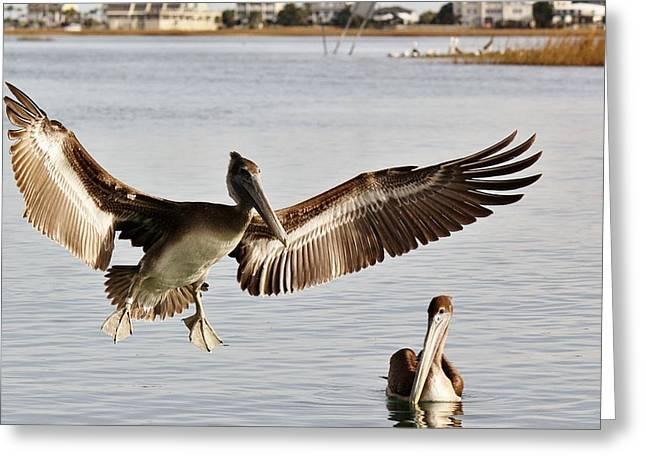 Pelican Wings Span Greeting Card by Paulette Thomas