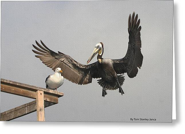 Greeting Card featuring the photograph Pelican Wins Sea Gull Looses by Tom Janca