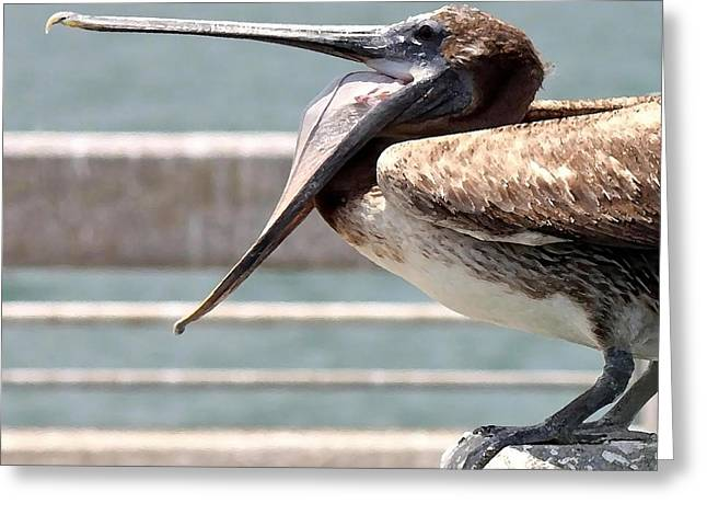 Pelican Yawn - Digital Painting Greeting Card by Carol Groenen